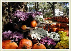 Autumn Pumpkins, Click for larger image.